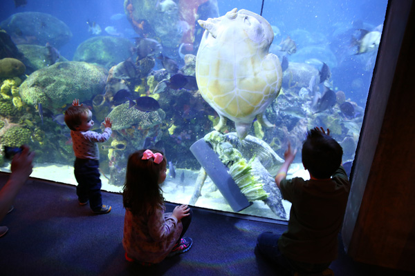 fun things for families to do in Chattanooga - The Tennessee Aquarium